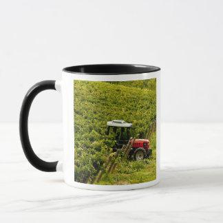 Italy, Tuscany, Greve. Pickers at work during Mug