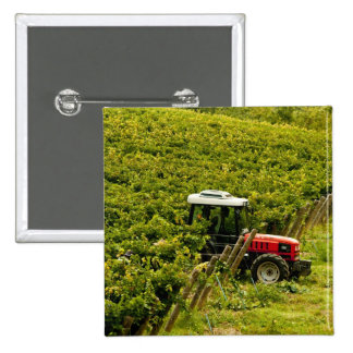 Italy, Tuscany, Greve. Pickers at work during Pinback Button