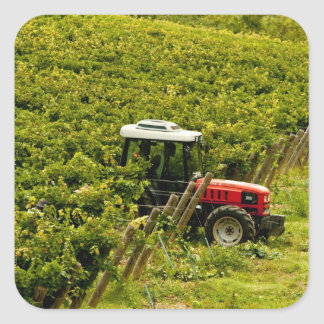 Italy, Tuscany, Greve. Pickers at work during Square Sticker