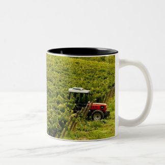 Italy, Tuscany, Greve. Pickers at work during Two-Tone Coffee Mug