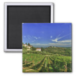 Italy, Tuscany, Greve. The vineyards of Castello 2 Inch Square Magnet