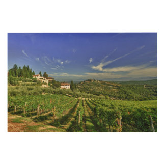 Italy, Tuscany, Greve. The vineyards of Castello Wood Print