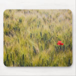 Italy, Tuscany, Lone poppy in Spring Wheat Mouse Pads