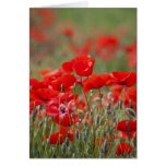 Italy, Tuscany, Mass of Summer Poppies in Greeting Card