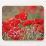 Italy, Tuscany, Mass of Summer Poppies in Mouse Pad