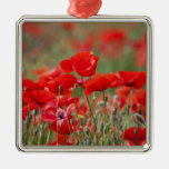 Italy, Tuscany, Mass of Summer Poppies in Square Metal Christmas Ornament