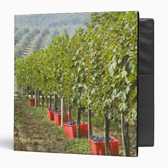 Italy, Tuscany, Montalcino. Bins of harvested 3 Ring Binder