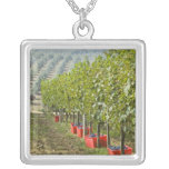 Italy, Tuscany, Montalcino. Bins of harvested Square Pendant Necklace