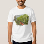 Italy, Tuscany, Montalcino. Bins of harvested T Shirt