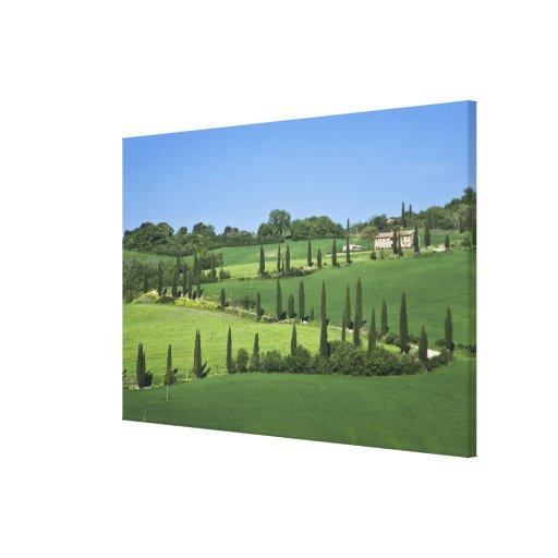 Italy, Tuscany, Multepulciano. Cypress trees Canvas Print