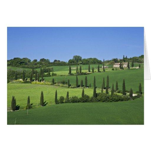 Italy, Tuscany, Multepulciano. Cypress trees Greeting Card