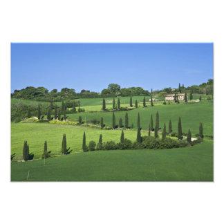 Italy, Tuscany, Multepulciano. Cypress trees Photo Print