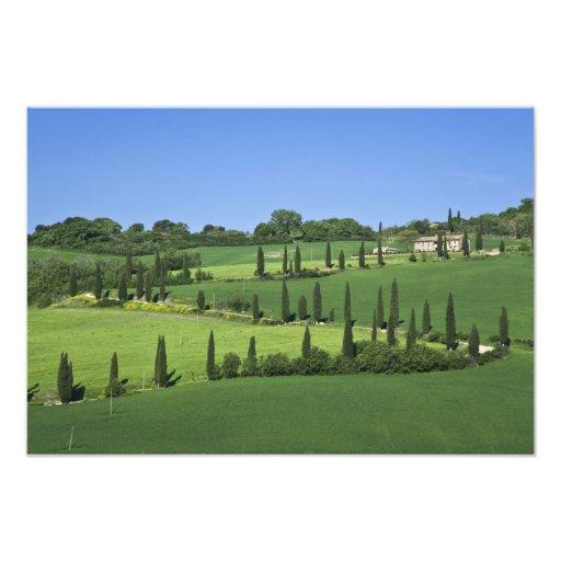 Italy, Tuscany, Multepulciano. Cypress trees Art Photo