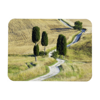 Italy, Tuscany, Pienza, Val d'Orcia, Cypress Magnet