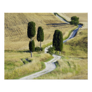Italy, Tuscany, Pienza, Val d'Orcia, Cypress Poster