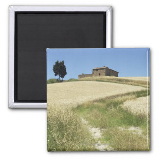 Italy, Tuscany, Pienza, Val d'Orcia, Wheat field Magnet