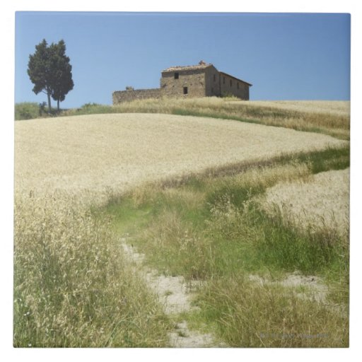 Italy, Tuscany, Pienza, Val d'Orcia, Wheat field Ceramic Tile
