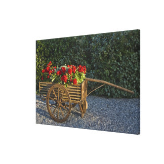 Italy, Tuscany. Red geraniums spill out of an Canvas Print
