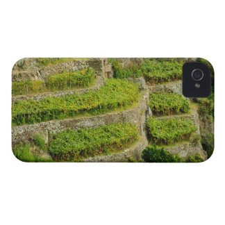 Italy, Tuscany. The terraced vineyards of Cinque iPhone 4 Cover