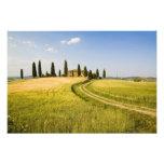 Italy, Tuscany, Tuscan Villa nearing Harvest. Photo Print