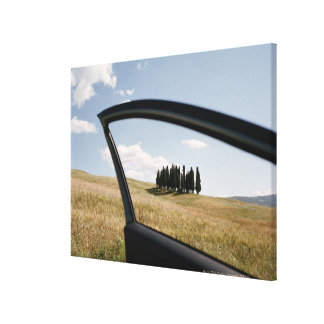 Italy,Tuscany,Val d'Orcia,Cypress trees in the Canvas Print