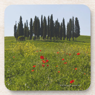 Italy, Tuscany, Val D'Orcia, Landscape Drink Coaster