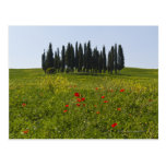 Italy, Tuscany, Val D'Orcia, Landscape Post Card