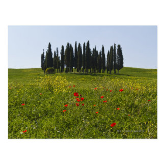 Italy, Tuscany, Val D'Orcia, Landscape Postcard