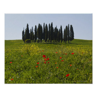 Italy, Tuscany, Val D'Orcia, Landscape Poster