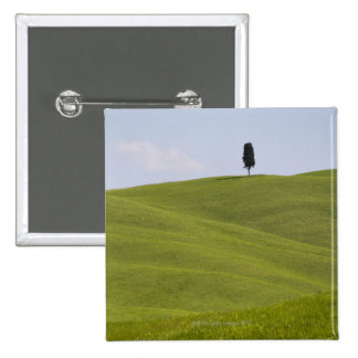 Italy, Tuscany, Val D'Orcia, Lone tree on hill Button