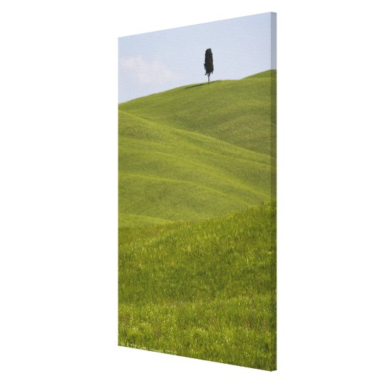 Italy, Tuscany, Val D'Orcia, Lone tree on hill Canvas Print