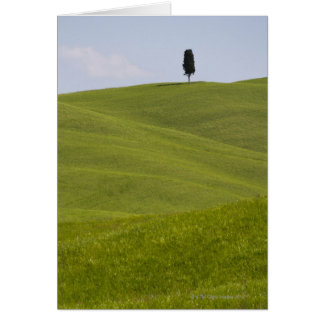 Italy, Tuscany, Val D'Orcia, Lone tree on hill Card
