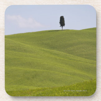 Italy, Tuscany, Val D'Orcia, Lone tree on hill Coaster