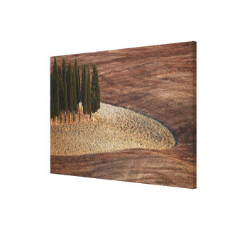 Italy,Tuscany,Val d'Orcia,San Quirico d'Orcia Canvas Print