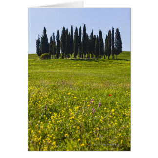 Italy, Tuscany, Val D'Orcia, Trees on meadow Card