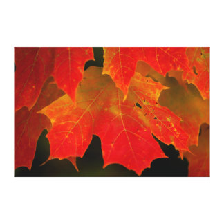 Itasca State Park, Fall Colors 2 Canvas Print