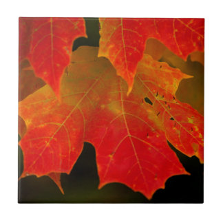 Itasca State Park, Fall Colors 2 Ceramic Tile