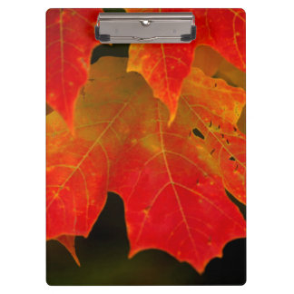 Itasca State Park, Fall Colors 2 Clipboards
