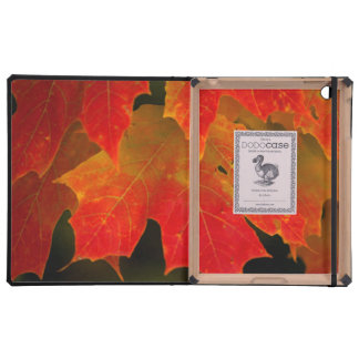 Itasca State Park, Fall Colors 2 Covers For iPad