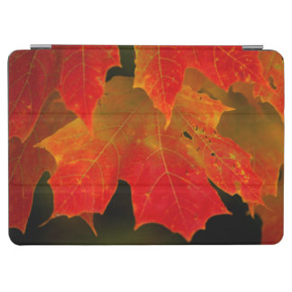 Itasca State Park, Fall Colors 2 iPad Air Cover