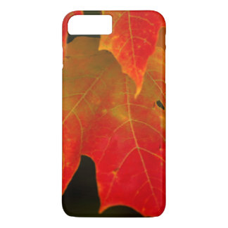 Itasca State Park, Fall Colors 2 iPhone 7 Plus Case