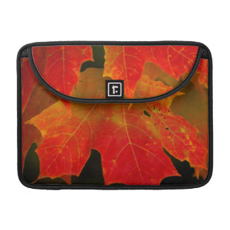 Itasca State Park, Fall Colors 2 Sleeves For MacBooks