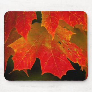Itasca State Park, Fall Colors 2 Mouse Pad