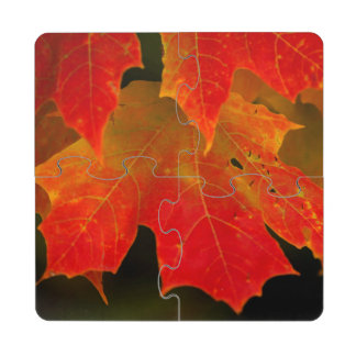 Itasca State Park, Fall Colors 2 Puzzle Coaster