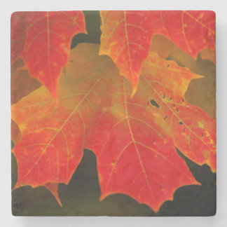 Itasca State Park, Fall Colors 2 Stone Coaster