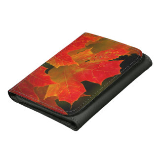Itasca State Park, Fall Colors 2 Wallets