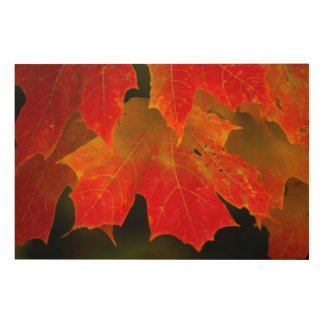 Itasca State Park, Fall Colors 2 Wood Canvas