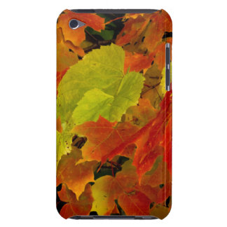 Itasca State Park, Fall Colors iPod Touch Case
