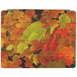 Itasca State Park, Fall Colors iPad Cover