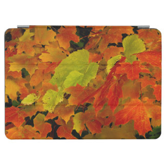 Itasca State Park, Fall Colors iPad Air Cover